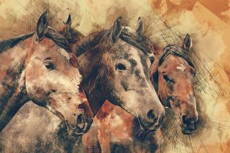 horses-1596288_1920