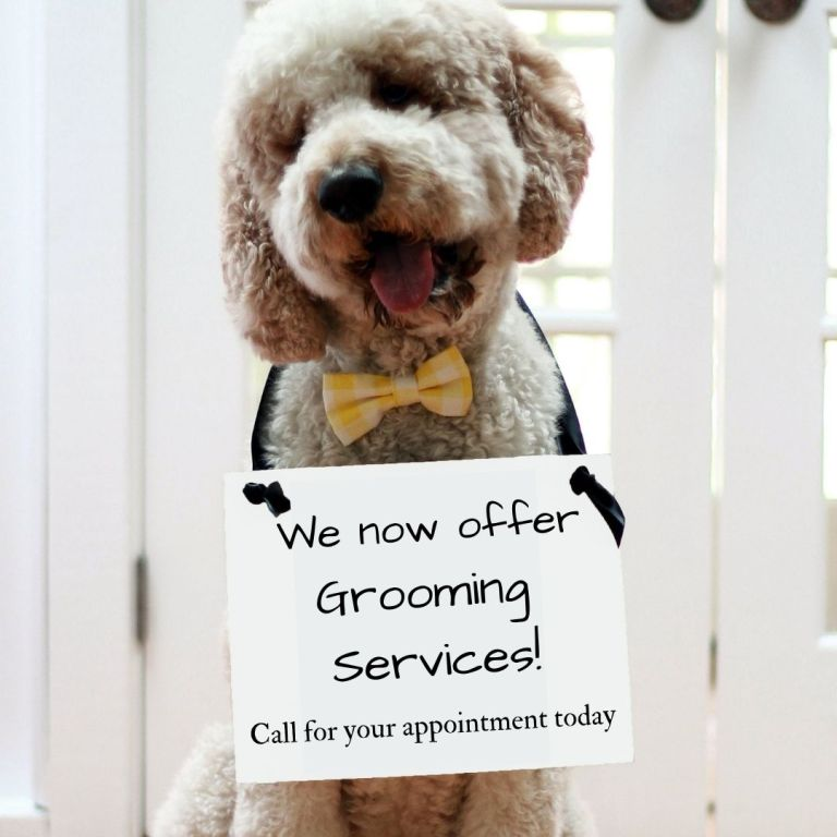 We now offer Grooming Services!