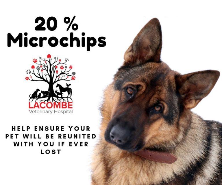 20 % Microchips